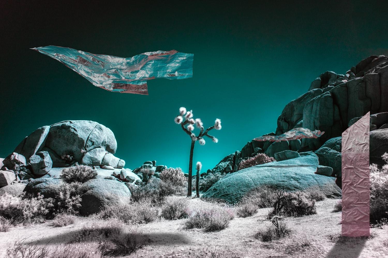 infrared photo joshua tree